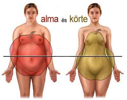 Zsírszövet eloszlása